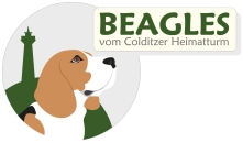Heimatturm-Beagles