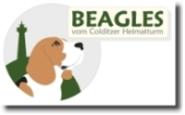 Heimatturm-Beagles